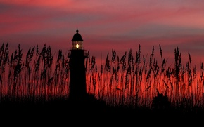 Picture the sky, clouds, sunset, lighthouse, plants