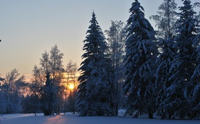 Wallpaper cold, winter, forest, dawn, Ust ' -Kut