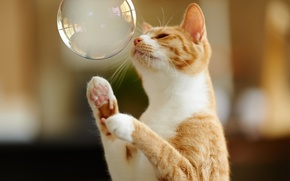Picture cat, the game, paws, red, bubble