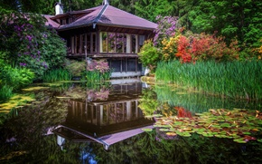 Picture flowers, pond, Park, reflection, the reeds, Japan, house