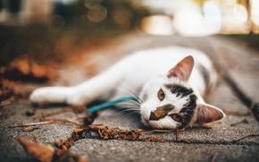 Picture autumn, cat, cat, bokeh
