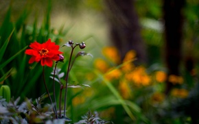 Picture flower, macro, red, nature