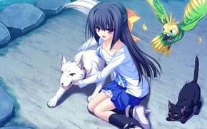 Picture anime, art, girl, lunaris filia