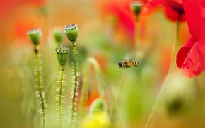 Picture bee, Maki, blur, flight