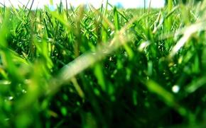 Wallpaper Grass, leaves, lawn