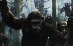 Picture monkey, monkey, Caesar, Caesar, chimpanzees, Planet of the apes: the Revolution, Dawn of the Planet …