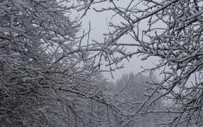 Picture Winter, Trees, Snow, Branch