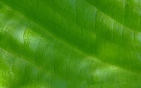 Picture macro, light, nature, sheet, green