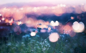 Picture flowers, lights, bokeh