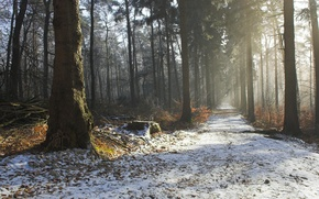 Picture winter, road, autumn, forest, trees, nature, beauty, morning, haze