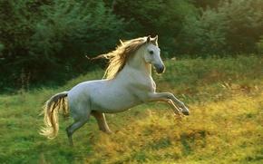 Wallpaper running, horse, meadow