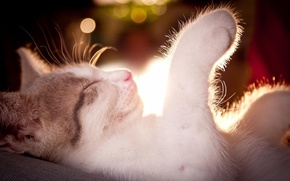 Picture cat, mustache, light, sleep, bokeh