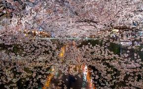 Picture flowers, night, branches, lake, spring, Sakura, lighting, flowering