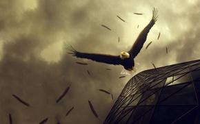 Picture flight, eagle, drop