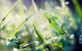 Picture grass, macro, nature, Rosa, petals