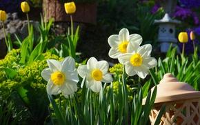 Wallpaper flowers, nature, garden, tulips, daffodils