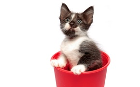 Picture red, cat, cup, red cupe