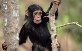 Picture surprise, monkey, animals with animals, mordaha