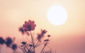 Picture fireball, flowers, sun, sunrise, drops