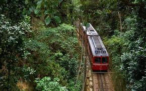 Picture train, Brazil, Rio de Janeiro, Tijuca forest national Park, mount Corcovado
