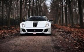 Picture road, autumn, trees, white, Ferrari, Ferrari, 599, GTO, TRP