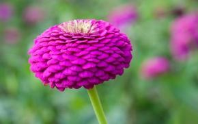 Picture flower, nature, petals, stem, Bud