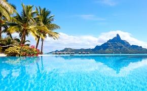 Picture sea, beach, tropics, palm trees, summer, sunshine, beach, sea, ocean, paradise, vacation, palms, tropical