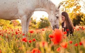 Wallpaper summer, horse, girl, nature
