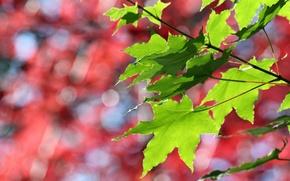 Wallpaper autumn, leaves, Forest, the Botanical garden