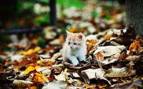 Picture kitty, foliage, Autumn