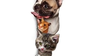 Picture Dog, Cat, Cat, Bulldog, Hamster, Animals