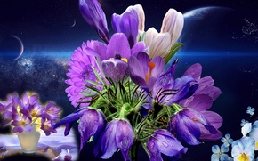 Picture night, Flowers, a month, still life