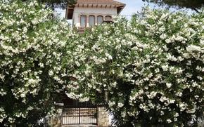 Picture summer, flowers, house, garden, Mallorca