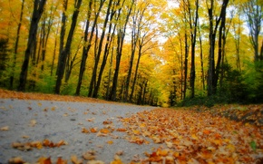 Picture road, autumn, forest, leaves, trees, nature, Park, colors, colorful, forest, road, trees, nature, park, autumn, …