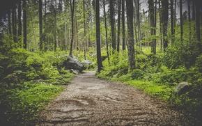 Wallpaper photo, path, photographer, markus spiske, trees, forest