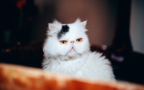 Picture cat, cat, face