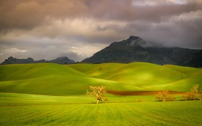 Picture field, the sky, grass, trees, mountains, clouds, hills