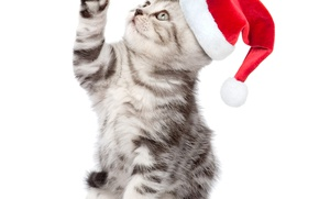 Picture kitty, hat, cute, New year, Christmas, New Year, kittens