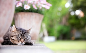 Picture cat, cat, face, flowers, paw, sleeping, pot