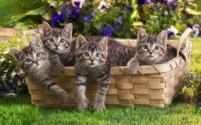 Picture grass, basket, kittens