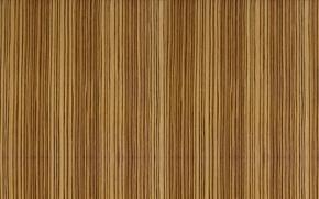 Picture style, strip, tree, finish, Zebrano