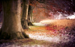 Picture autumn, forest, trees, nature, trail, trees, trail, path