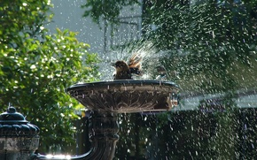 Picture drops, squirt, vigor, birds, freshness