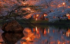 Picture lights, river, the evening, Sakura, Japan, flowering
