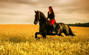 Picture girl, horse, wheat field, riding, farmland