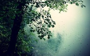 Picture leaves, drops, trees, nature, rain, romance, puddles