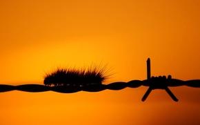 Picture orange, wire, Caterpillar