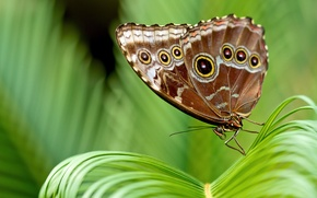 Picture leaves, butterfly, plant, brown