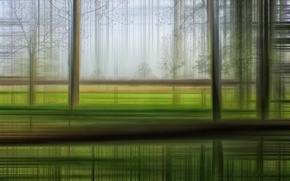 Picture movement, trees, grass