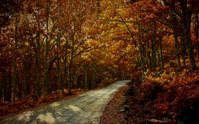 Picture road, trees, spain, Europe, autumn, way, route, fall, Caceres, dead leaves, fallage, Extremadura, Garganta La ...